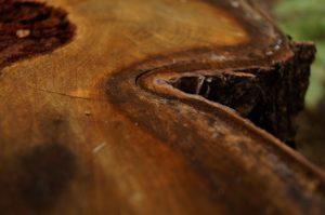 wood-966769_640